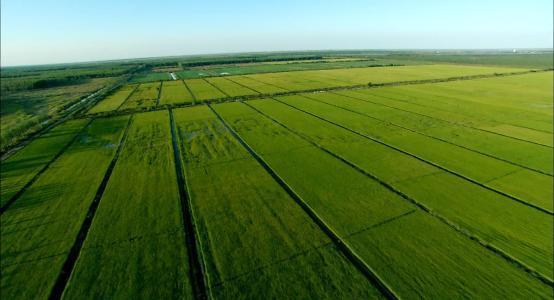大丰收采集AI技术搞起了先进农业