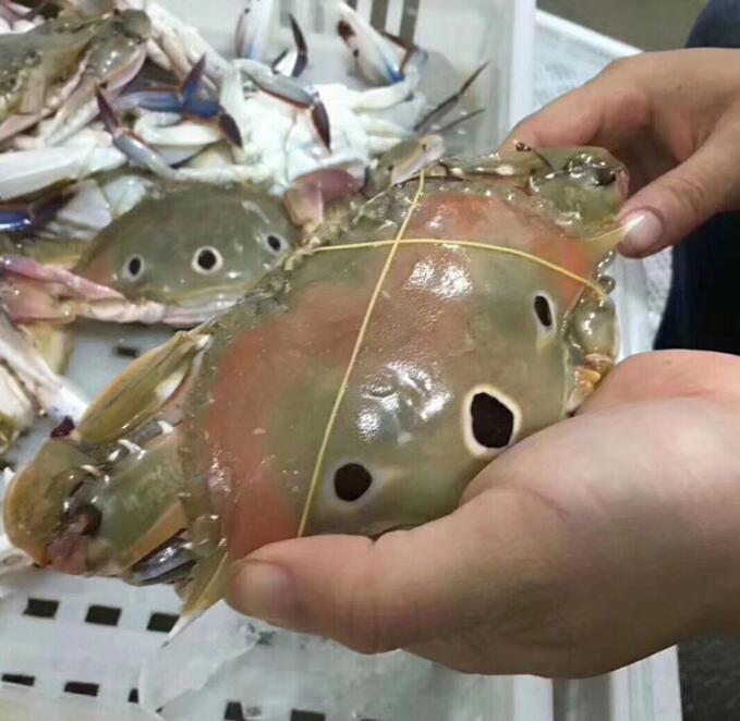 东山岛海鲜批发代理 自有渔船 货源稳定 免费代理