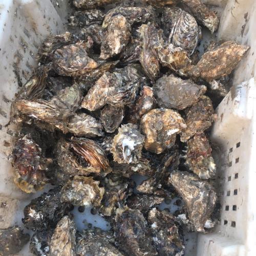 我是山东滨州的!想做海鲜微商!有能提供货源的吗?