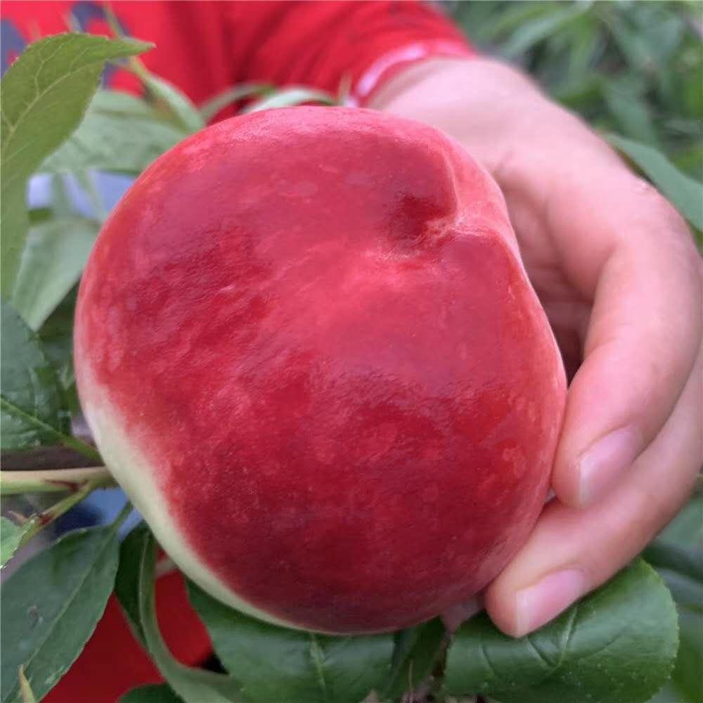水果微商货源水果产地基地果园直发一件代发一手货源
