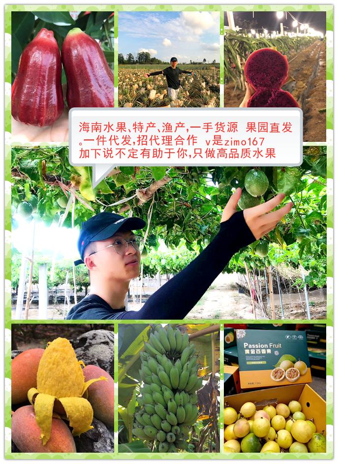 海南水果一件代发 精品水果水产品