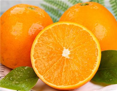 果冻橙基地直供货源