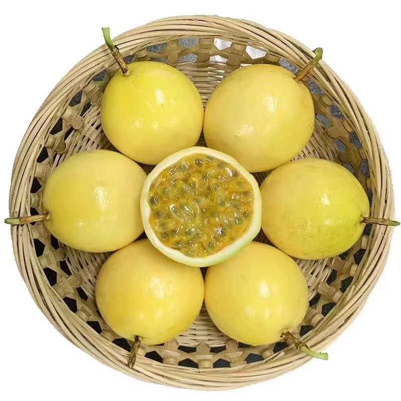 海南热带应季水果一件代发,批发   '代发'
